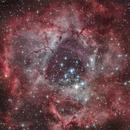 The Rosette nebula,                                  Max Gillet