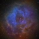 NGC2244 - HST - Rose Nebula,                                northwolfwu