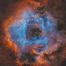 Rosette Nebula NGC 2237,                                Gregory