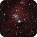 NGC2264,                                Surfus_1980
