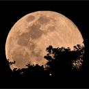 The Rising Super Moon,                                Odilon Simões Corrêa