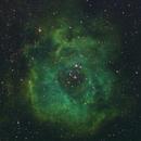 Rosette Nebula in Narrowband,                                Colin Thomas