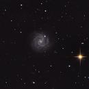 Spiral galaxy NGC 3184  in UMa,                                apricot
