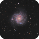 M74  Phantom Galaxy,                                sky-watcher (johny)
