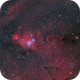 NGC 2264,                                Leo Shatz