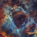 The Rosette (NGC 2244, C49),                                Gary Lopez