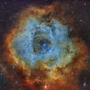 Rosette Nebula SHO - NGC2237,                                Christian_Hilbert