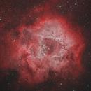 Rosette Nebula Bicolor,                                Scott Tucker