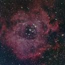 Rosette Nebula,                                rayp