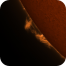 Sun prominences 16.4.2020 08:24 UT H-Alpha,                                Sepp Käser