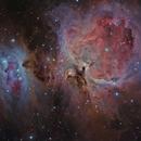 M42 - Great Orion Nebula,                                Tim Lewis