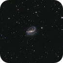 NGC7479,                                Danny Flippo