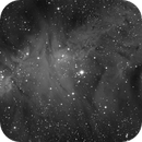 NGC 2264 in HA,                                apaquette