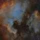 North American and Pelican nebulae,                                John Willis