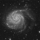 M101,                                Dan Wilson