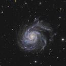 M101 Pinwheel Galaxy - HaLRGB,                                Zheng Fu