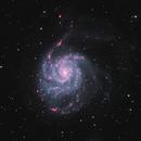 M101 in HaLRGB,                                Dan Kusz