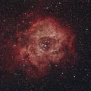 The Rosette nebula,                                Jim Knapp