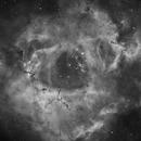 Caldwell 49, The Rossette Nebula in HA,                                Dan West