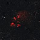 Cats Paw Nebula - NGC 6334 ,                                Marcelo Domingues