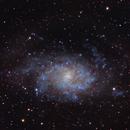 Triangulum Galaxy,                                Carl Schreiner