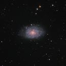 NGC 7793 Bond's Galaxy,                                Steve de Lisle
