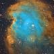 NGC 2174 - Monkey Head Nebula,                                Andrew Marjama