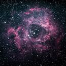 NGC2244 Rosette Nebula - different processing,                                Maciej Pliszkiewicz