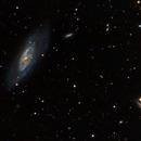 M106 Galaxia espiral de Seyfert,                                Ernesto Arredondo