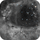 Rosette in HA with RGB Stars,                                Nathan Morgan (nm...