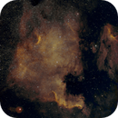 Golden North America,                                Kosma314