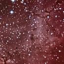 NGC2237 Bok Globules like animals in the Rosette Nebula. Panther, dog and donkey. Unguided.,                                Juan Pablo (Observatorio JuPiTeR)