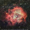 NGC-2244 im Rosetten-Nebel,                                Okke_Dillen