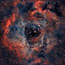 My First Rosette Nebula,                                newtonkp