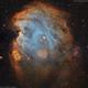NGC 2175 - Monkey Head Nebula,                                Dhaval Brahmbhatt