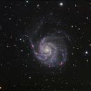 M101 Pinwheel Galaxy  ,                                Rick153