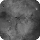 The Elephant's Trunk Nebula (IC1369) imaged in Hydrogen-alpha,                                Andrew Klinger