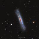 The Hamburger Galaxy,                                Teagan Grable