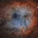 IC1396 widefield,                                MartinF