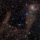 NGC 1788 Fox Face Nebula,                                Rodney Watters