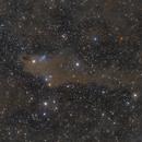 The Dark Shark Nebula (LDN1235),                                Lorenzo Palloni