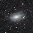 NGC 5055 (M63) and its stellar streams,                                Giuseppe Donatiello