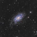 NGC2403 in Camelopardalis,                                Toshiya Arai