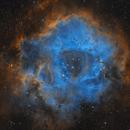 Rosette Nebula - SHO from DSW,                    Steve Milne