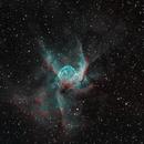 NGC2359 Thor's Helmet,                                TomSoIN