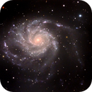 M101- Pinwheel Galaxy,                                Matt Harbison