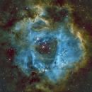 Rosette Nebula - SHO,                                Jason Archer
