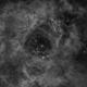 Nébuleuse de la Rosette,                                guillau012