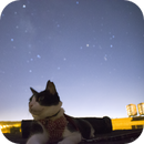 the Cat with milkyway,                                Kuan Chen