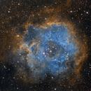 NGC 2244 - The Rosette Nebula,                                Chris Fellows